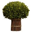 Napa Home and Garden Preserved Boxwoods Preserved Greens Willow Stand Desk Top Plant