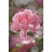 <strong>Fototapete 'Bouquet' - 184 x 254 cm</strong> von Komar