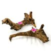 Jungle Driftwood Wood Tealight Holders (Set of 2)