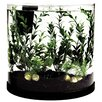 <strong>Tetra</strong> 3 Gallon Bubbling Half Moon Aquarium Kit