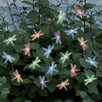 Smart Solar Smart Solar Accents Dragonfly Light String