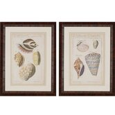 Shell Study by Martini 2 Piece Framed Painting Print Set
