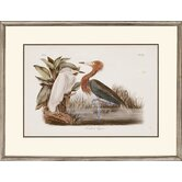 Audubon Egrets by Audubon Traditional Art (Set of 2) - 24&quot; x 31&quot;