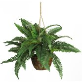 Silk Boston Fern Plant with Hanging Basket in Green
