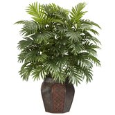 Areca Palm with Vase