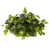 Pothos Ledge Plant (Set on Foam) Silk Plant
