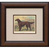 Irish Setter Framed Print