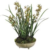 26&quot; Mini Cymbidium Orchid Plant with Moss/Succulent in Ceramic Bowl
