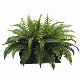 "17"" Boston Fern with Long Metal Container"