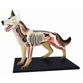 4D-Vision Dog Anatomy Model
