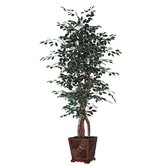 Blue Ridge Fir Square Executive Variegated Tree