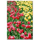 "Red and Yellow Tulips by Kurt Shaffer, Canvas Art - 24"" x 16"""