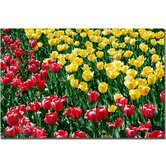 "Red and Yellow Tulips II by Kurt Shaffer, Canvas Art - 16"" x 24"""
