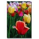 In Among the Blooming Tulips by Kurt Shaffer, Canvas Art - 36 x 24""