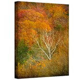 David Liam Kyle 'In Autumn' Gallery-Wrapped Canvas Wall Art