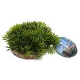 Green Moss Large Bottom Plant