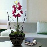 Laura Ashley Home Faux Florals & Wreaths