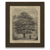 Timeless Timber Horse Chestnut Tree Framed Graphic Art