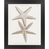 Striking Starfish I by Vision Studio Framed Graphic Art