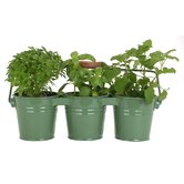 3 Pail Planter with Handle