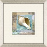 Restful Shell A Framed Art