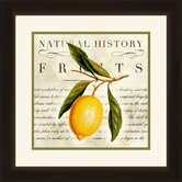 Natural History Fruits Framed Wall Art (Set of 2)