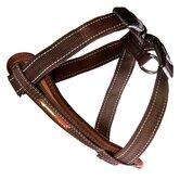 EzyDog Dog Leashes, Collars & Harnesses