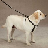 East Side Collection Dog Leashes, Collars & Harnesses