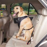 Fairfield Dog Car Harness