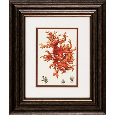 Propac Images Red Coral I / III Framed Art (Set of 2)