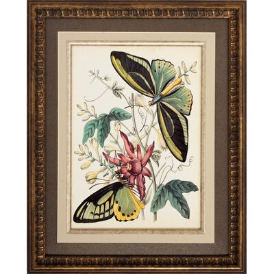 Propac Images Fancy Flight I/II Wall Art (Set of 2)