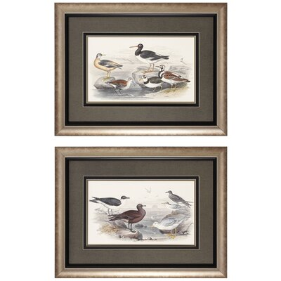 Gulls / Oyster 2 Piece Framed Graphic Art Set (Set of 2)