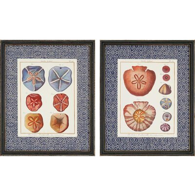 Sand Dollars by Diderot 2 Piece Framed Wall Art Set