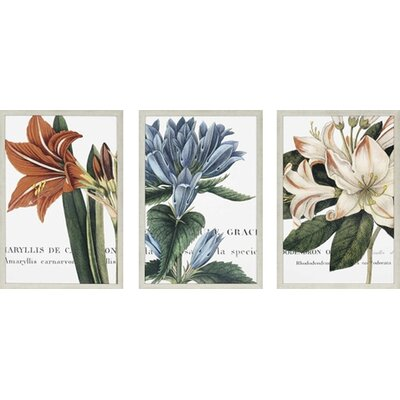 Paragon Botanique 3 Piece Framed Graphic Art Set