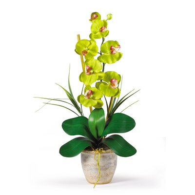 Phalaenopsis Silk Orchid Arrangement in Green