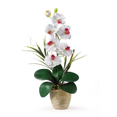 Nearly Natural Phalaenopsis Silk Orchid Arrangement in White