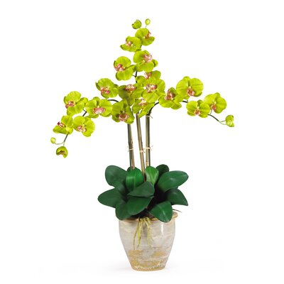 Triple Phalaenopsis Silk Orchid Arrangement in Green