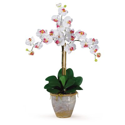 Triple Phalaenopsis Silk Orchid Arrangement in White