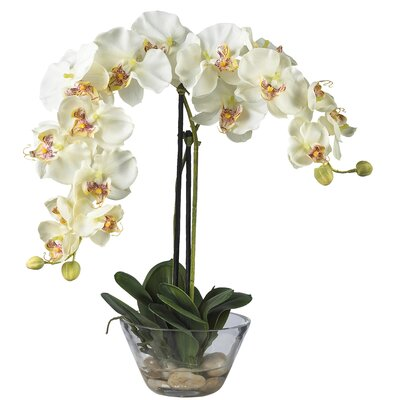Nearly Natural Phalaenopsis Silk Orchid Arrangement in White with Glass Vase