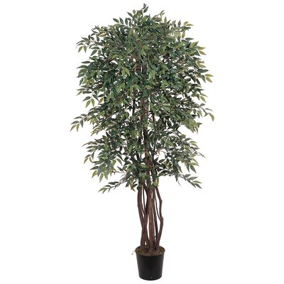 Similax Tree in Pot