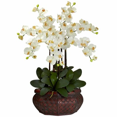 Nearly Natural Large Phalaenopsis Silk Flower Arrangement in Cream