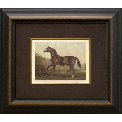 Phoenix Galleries Thoroughbred Horse Framed Print