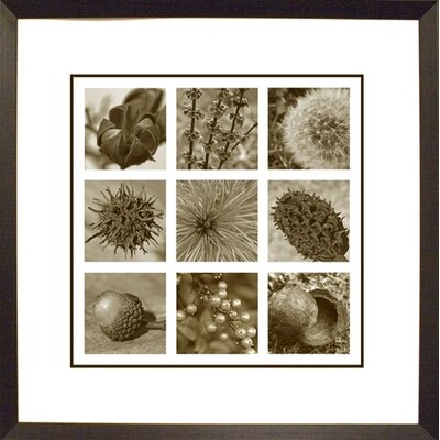 Phoenix Galleries 9 Seeds Framed Print