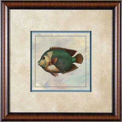 "Phoenix Galleries Tropical Fish 2 Framed Print - 21""x 21"""
