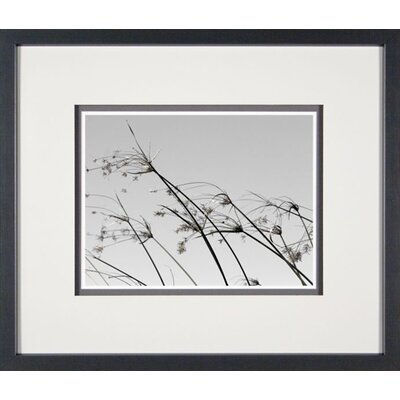 Phoenix Galleries Grasses in the Wind 4 Framed Print