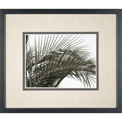 Phoenix Galleries Palm Leaf 4 Framed Print