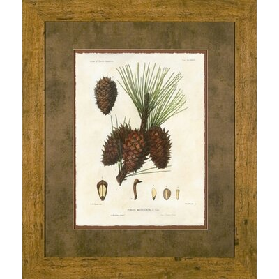 Phoenix Galleries Pine Cones I Framed Print