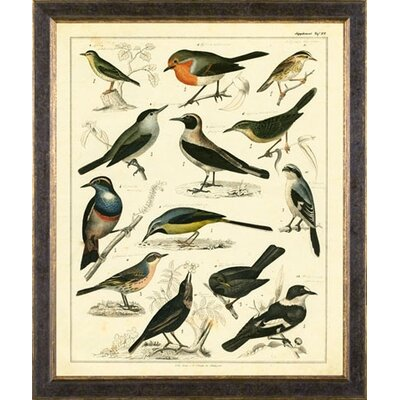 Phoenix Galleries Aviary 1 on Canvas Framed Print