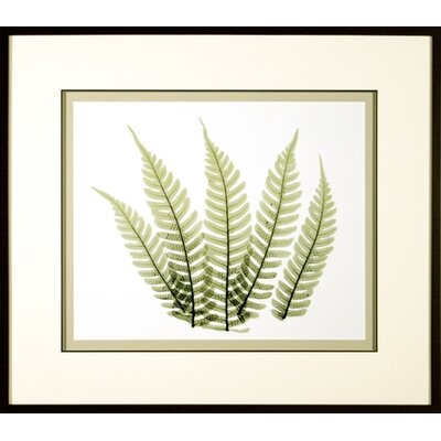Phoenix Galleries Woodlands 2 Framed Print