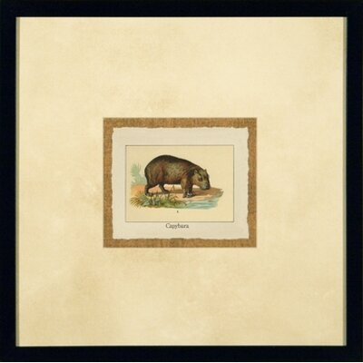 Phoenix Galleries Capybara Framed Print